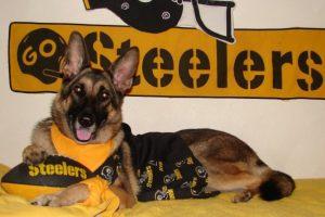 Craigslist Pittsburgh Pets
