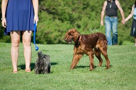 Pet owners walking dogs